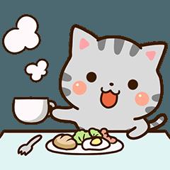 肉肉的美國短毛貓