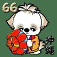 シーズー犬66『沖縄』