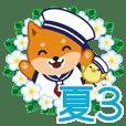 柴犬「ムサシ」29 夏3