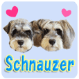 Schnauzer's use sticker.