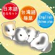 豚鼠(台湾+日本+英语)