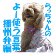 toy poodle LUCK 3