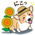 A sticker willingly. Welsh Corgi Summer