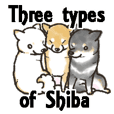 Three types of Shiba.english version