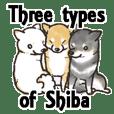 Three types of Shiba.english version