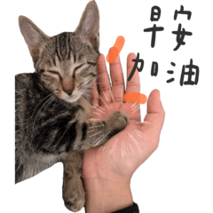 我是勇之助的貓叫皮蛋