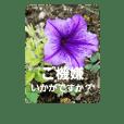 優しい敬語のお花達2