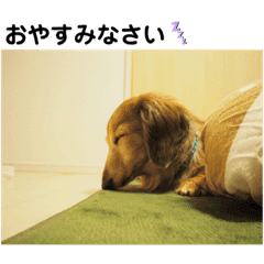 ふぁんとむスタイル(故愛犬のスタンプ)③