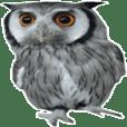 フクロウのかわいいリアル画像のスタンプ