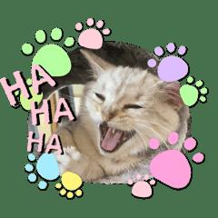 子猫のミヤちゃん〜日常使えるシンプル挨拶