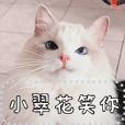 布偶貓小翠花小姐 訊息貼圖