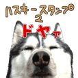 husky dog Sticker2