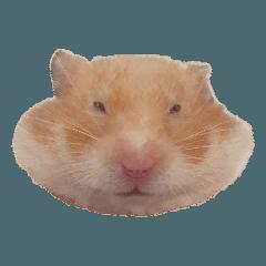 鼠妮 一隻小倉鼠