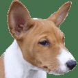 バセンジー犬