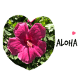 ALOHA Love from Hawaii