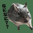 アンデスの歌うネズミ