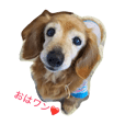 Cute Kawaii dog Dachshund