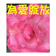 Danau Flower dengan bahasa embun 2