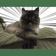 kansai ben CAT