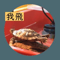 圈圈龜龜的自製貼圖