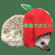 Mogu the hedgehog