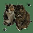 ペットの猫 ミカンとルル