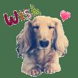 I'm Wish