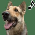 阿尔萨斯狼犬的貼圖
