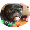 Daily greetings by pug dog's Monaka.
