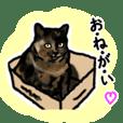 サビ猫のミーコ