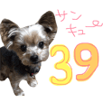 愛犬♡ヨーキー