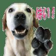 Labrador AI