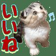 三毛猫マンチカンのシンプルスタンプ