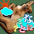保護犬のわんこ7