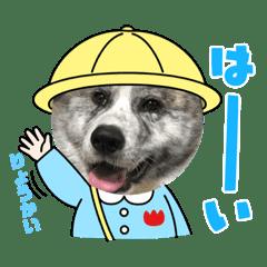 秋田犬の日常