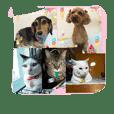 nya-go-dog-cat5