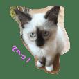 猫のギズモと5ニャング