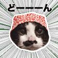 ハチワレ猫のごえもんくん(猫写真)