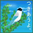 """野鳥のスタンプ """"オナガ"""""""