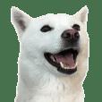 koyuki's doglife