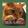 テキ様♡すたんぷ