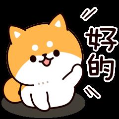 Answer Shiba Dog
