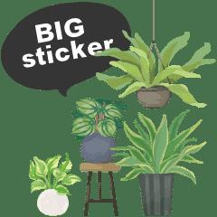 観葉植物ビックスタンプ