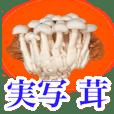 生存的蘑菇