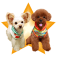 Dog model Sticker