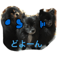 ウチのワンコ家族