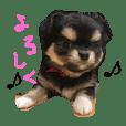チワワのおはぎちゃん!〜ヘタレ犬の日常〜
