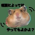 ほのぼの 博多弁ハム☆