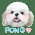碰碰Pong的小幸福