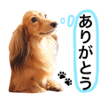 BEAT KENNEL DOG STICKERS 5